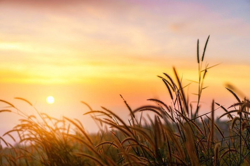 image of sunset over field to symbolize grief and loss